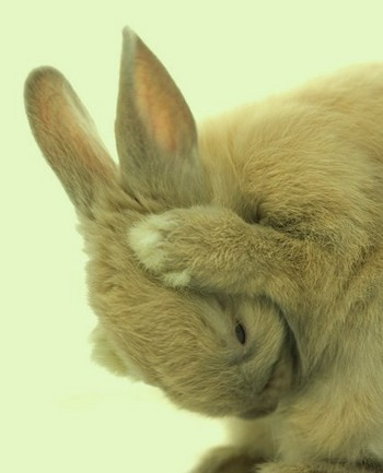 rabbit002.jpg